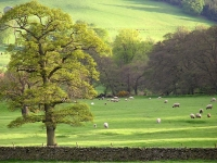 typical-landscape-scottish-borders.jpg