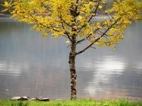 0_autumn-loch-maree.jpg