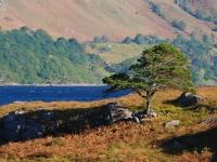 6_scots-pine-loch-maree.jpg