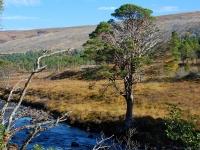9_glen-torridon-landscape.jpg