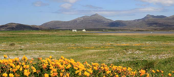 Flowers on the Machair in the western part of South Uist