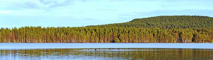 abernethy-forest