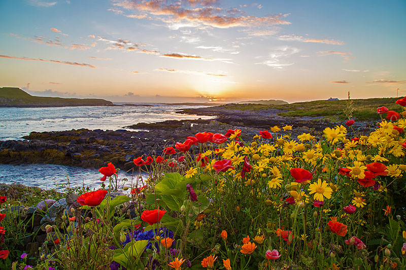 sunset-flowers-port-wemyss